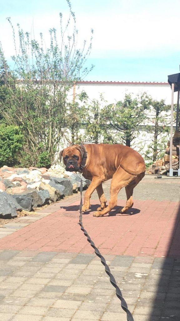 Hund mit langer Leine
